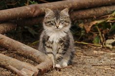 looks like my cat named Kitty