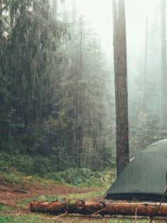Дождь в лесу