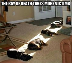the ray of death