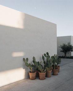 Le plus récent Écran mediterranean Style Architectural Réflexions Exterior Design, Interior And Exterior, Outdoor Spaces, Outdoor Living, Cactus, Natural Interior, Garden Inspiration, Indoor Plants, Outdoor Gardens