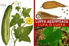 Vegetables, Natural, Stuffed Peppers, About Plants, Climber Plants, Medicinal Plants, Harvest, Growing Up, Vegetable Garden