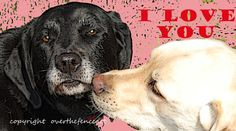 Father's Day Card Mother's Day Card Labrador by overthefenceart