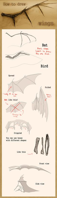 How to draw wings by Mndcntrl.deviantart.com