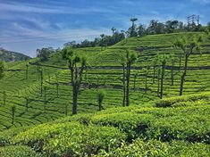 Theres no time  to be bored in a world as beautiful as this! . . . . . . . #nature #green #breeze #cool #beautiful #earth #teaplantation #sky #blue #tree #ooty #udagamandalam #glenmorgan #instagood #picoftheday #photooftheday #iphonography #travel #travelphotography