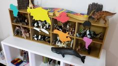 Blydie's Animal Collection - Stored by continent!