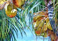 """Coconuts"" watercolor, Therese Ferguson, theresefergusonartworks.com"