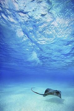 Natures Doorways | underwater world | sting rays | clear blue waters