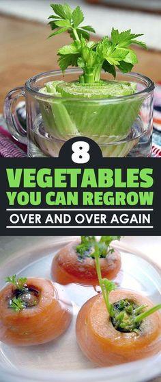 How to regrow carrot tops #Organic_Gardening