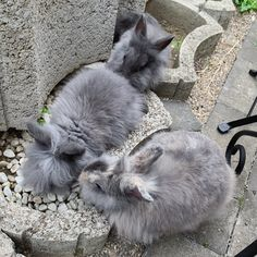 How to take care of bunnies! Rabbit Behavior, Bunny Care, Fur Babies, Bunnies, Take That, Shapes, Pets, Colors, Animals