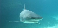 An open letter to folks about the shark attacks on the North Carolina coast. Please don't use these isolated incidents as an excuse to start killing sharks.