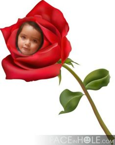 11 Mejores Imágenes De Fotomontaje De Rosa Photomontage Roses Y
