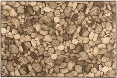 Covor Lido Dark Beige, Axminster #homedecor #interiordesign #inspiration #carpets #trends Dark Beige, Dog Food Recipes, Fruit, Pets, Modern, Design, Interiors, Trendy Tree