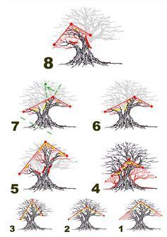 LESSON #3:  PRUNING!         Some people really have a difficult time pruning and cutting any branch is almost impossible for them. There's not much we can do to help them. But we can explain WHY we prune as drastically as we do . . . Simply because it produces outstanding results!  So here are more no-nonsense explanations presented with the hope you will substitute knowledge to overcome fear and move into training bonsai!  THE PRINCIPLES WORK!  GOOD LUCK! http://www.fukubonsai.com/4a6.html