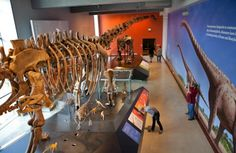Dinosaur Hall - View from the Mezzanine