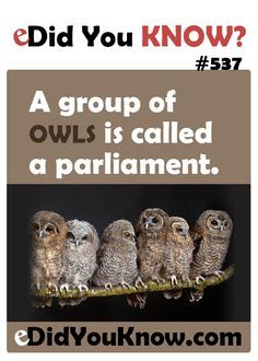 http://edidyouknow.com/did-you-know-537/ A group of owls is called a parliament.