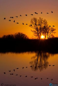 Golden sun rays     nature     sunrise      sunset   #nature  https://biopop.com/