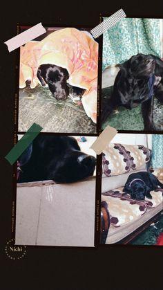 Black Labrador Dog, Black Lab Puppies, Labradoodle, Color Pop, Labrador Retriever, Dogs, Animals, Labrador Retrievers, Black Labrador Puppies