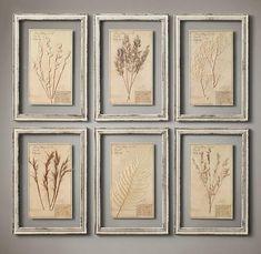 19世紀 植物標本(6枚セット)アイボリー色フレーム - 壁掛け アート専門店 - Timeline & co
