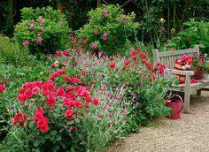 Conseils pour tailler les rosiers et avoir une floraison abondante F. Marre - Rustica