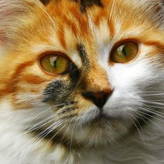 We feature the most of lovely cat on the world , for more please visit www.collection4world.com