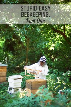 Stupid-Easy Beekeeping: Part 1 | How to start keeping honeybees in your own backyard. | stupideasypaleo.com