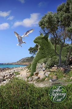 The Topiary Cat fending off seagulls disturbing his nap.