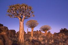 National Geographic Your Shot Quiver, Tree Forest, National Geographic Photos, Your Shot, Dusk, Amazing Photography, Shots