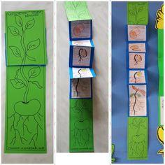 Fasülyenin yaşam döngüsünü.  Cannur HAZNEDAR Phonics For Kids, Teaching Phonics, Preschool Learning, Space Theme Preschool, Life Cycle Craft, Phonics Programs, Jolly Phonics, Art N Craft, Science Activities