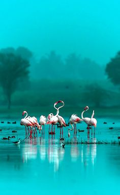 Hello... My name is Jean .. Welcome to my Blog!!! The pictures I blog are not my own but I hope you...