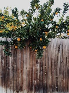 I'm not sure how my dream house will be in the mountains by a lake and still be warm enough to grow citrus trees, but there it is.