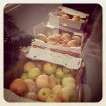 Creative Food Storage - those apples are sitting in our truck!