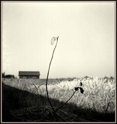 Kansuke Yamamoto , mid. 1930s ©Toshio Yamamoto.