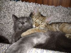 MY MUMMY  #cat cats kitty kitten cute love mother