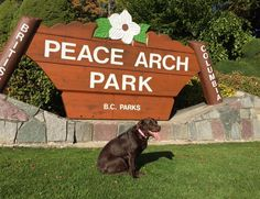 Bella hanging out at Peace Arch Park in Surrey Arches Park, Prince Edward Island, Surrey, Hanging Out, Canada, Peace, Adventure, Day, Adventure Movies