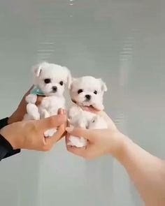 Do you consider you realize everything about our canine companions? Take a look at these 10 surprising facts about dogs. 👩 dogs Ten Provocative Dog Facts That You Do Not Know About! Cute Little Puppies, Cute Little Animals, Cute Dogs And Puppies, Cute Funny Animals, Baby Dogs, Cute Babies, Doggies, Adorable Puppies, Little Dogs