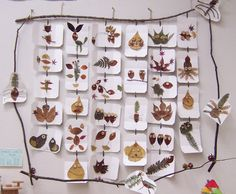light table tracing/art in the reggio classroom Easy Fall Crafts, Crafts To Make, Crafts For Kids, Arts And Crafts, Reggio Emilia, Forest School, Leaf Crafts, Autumn Art, Autumn Activities