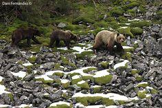 El oso y sus crías. Nosotros te lo enseñamos.