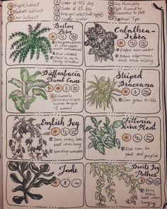 """Throw Some Herbs On That Shit herbwicc: """"Pages one & two of Common House Plants in my grimoire :) """" Witchcraft Spell Books, Green Witchcraft, Garden Journal, Nature Journal, Journal Aesthetic, Witch Aesthetic, Calathea, Bujo, Just Add Magic"""