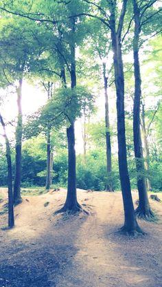 Wunderschöner Wald um mit dem Hund spazieren zu gehen.....ohne Leine.