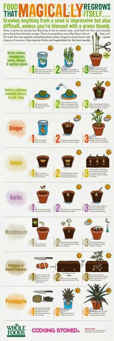 Food That Magically Regrows Itself from Kitchen Scraps  Don't Throw It, Grow It!: 68 windowsill plants from kitchen scraps : http://amzn.to/1DaKMMc