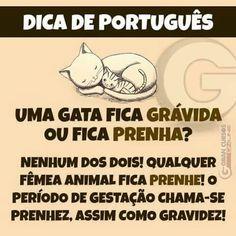 Português - gramática Portuguese Grammar, Portuguese Lessons, Learn Brazilian Portuguese, Language Study, Interesting Information, Self Awareness, Study Motivation, Professor, Student