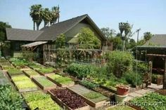 permaculture farm with raised beds The Farm, Small Farm, Farm Gardens, Outdoor Gardens, City Farm, Living Off The Land, Urban Homesteading, Best Places To Live, Urban Farming