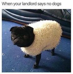 Woof In Sheep's Clothing.