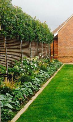 Small Backyard Landscaping, Large Backyard, Landscaping Ideas, Mulch Landscaping, Simple Backyard Ideas, Southern Landscaping, Simple Garden Designs, Courtyard Landscaping, Backyard Trees
