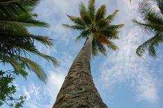 holly tree at jeep island