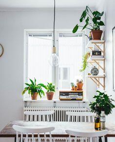 white kitchen, lots of plants