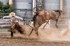 Will James Roundup, Ranch Rodeo, Ranch Bronc Riding, Quinn Larson, Hardin, Montana