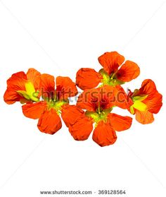 Nasturtiums does best with no care at all blooming from spring