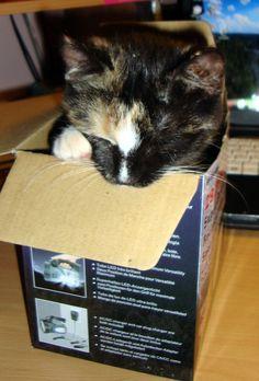 Tara tuhoamassa laatikkoa
