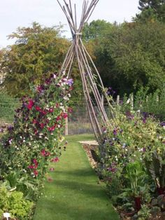 a Sweat Pea tee pee. Wouldn't that be pretty when they all grow & climb on it a Sweat Pea tee Back Gardens, Outdoor Gardens, Courtyard Gardens, Burford Garden Company, Allotment Gardening, Allotment Design, Garden Arches, Climbing Vines, Deco Floral
